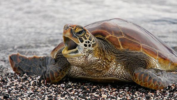 slow-Turtle.jpg