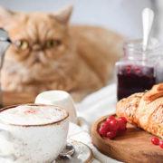 10-must-770-cat breakfast in bed.jpg