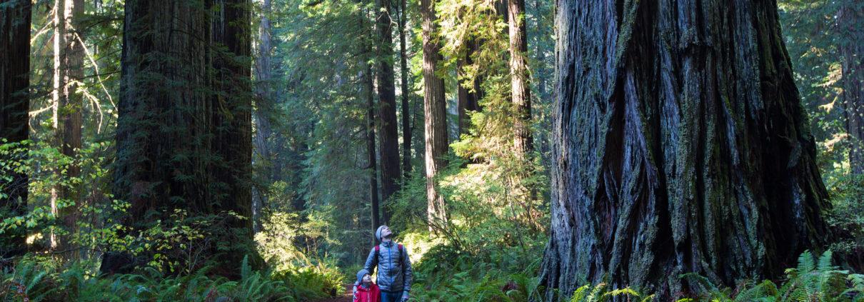 forest-getty-501976774.jpg
