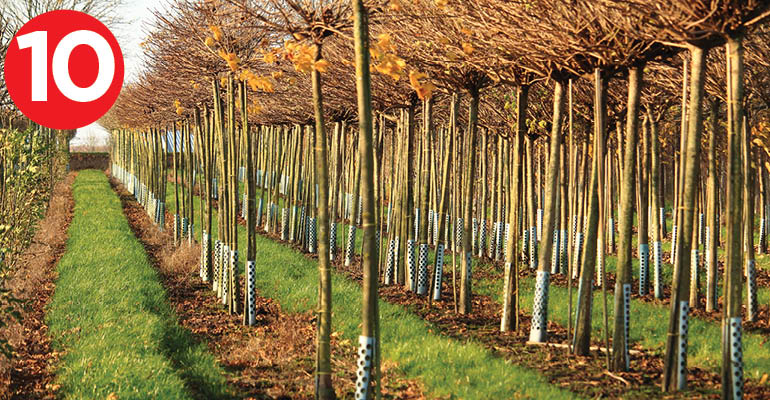 10-must-770-tree farm Getty Images.jpg
