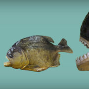 big-fish-eat-med-eat-small.jpg
