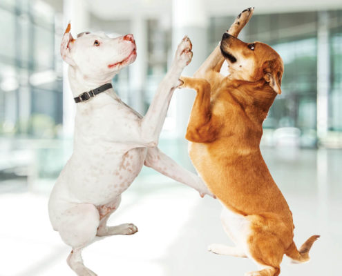 dogs play in converted office.jpg